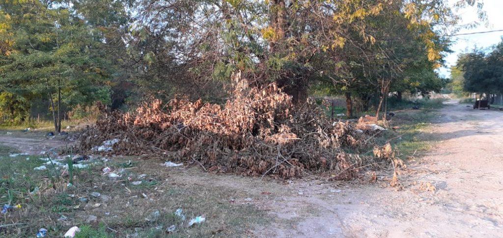 Basurales y ramas caídas en los barios de la Ciudad de La Plata