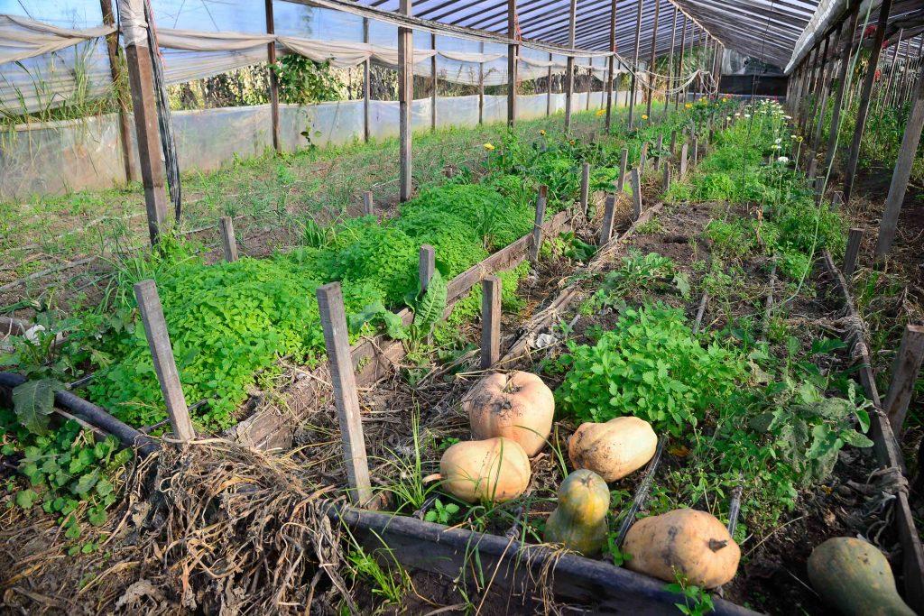 COlecta solidaria de verduras