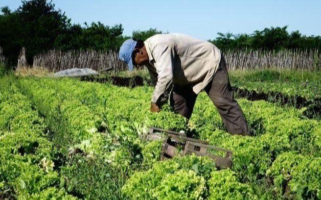 Productores hortícolas  reclaman seguridad a Garro