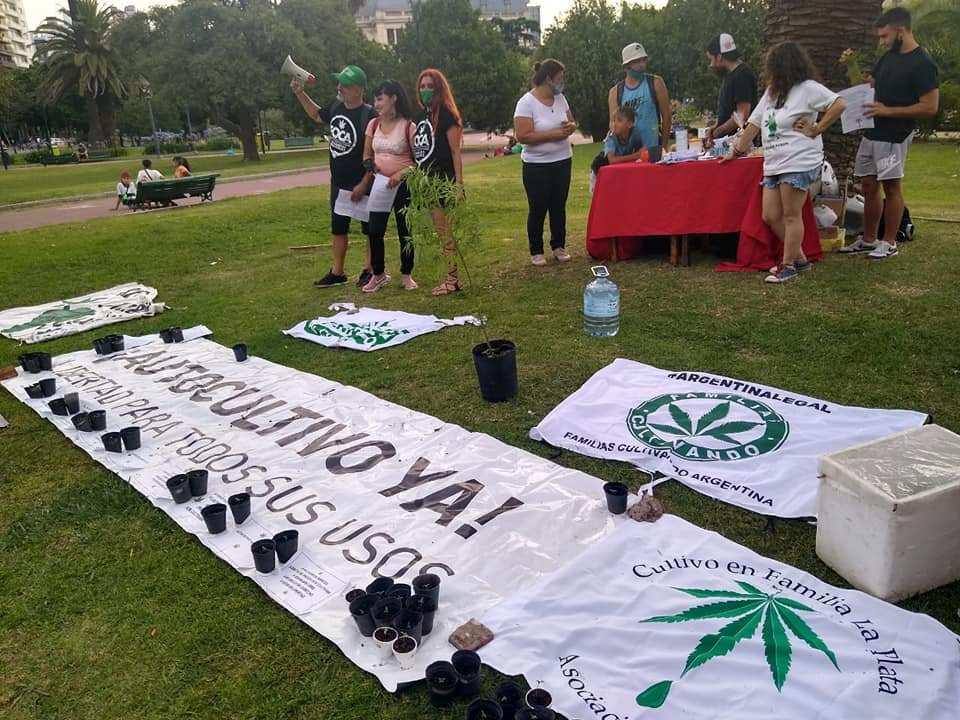 activistas cannábicos
